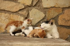 Moederkat en haar katjes die samen rusten Royalty-vrije Stock Afbeeldingen