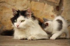 Moederkat en haar katjes die samen rusten Royalty-vrije Stock Foto