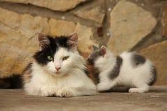 Moederkat en haar katjes die samen rusten Stock Afbeelding