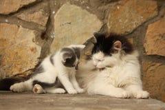 Moederkat en haar katjes die samen rusten Stock Afbeeldingen