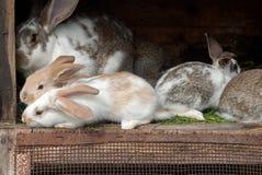 Moederkonijn met pasgeboren konijntjes Stock Fotografie