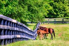 Moederpaard en veulennen Stock Fotografie