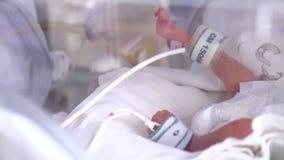 Moederschapscentrum Streng zieke pasgeboren in incubator, intensieve het ziekenhuistherapie: CCU, ICU, ITU Het uiterst kleine bab stock videobeelden