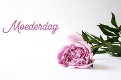 Moedersdag, Moederdag in het Nederlands Roze pioen, ruimte voor exemplaar stock fotografie