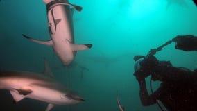 Moedige duiker dichtbij haaien Royalty-vrije Stock Foto's