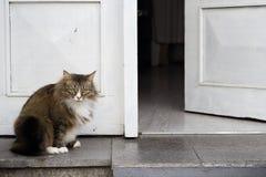 Moedige vette kat die huis bewaken, die zich vooraan bevinden, royalty-vrije stock afbeeldingen