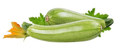 Moelle /courgette de légume frais d'isolement sur le blanc Image libre de droits