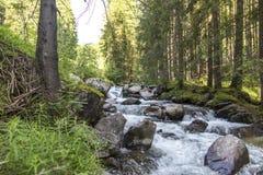 Moena, San Pellegrino Pass, Dolomites, Trentino Alto Adige, the Alps in summer. Mountain river in the Alps. Summer in the mountain. S royalty free stock image