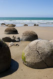 Moeraki Boulders. Geological feature found in  new zealand Royalty Free Stock Photos