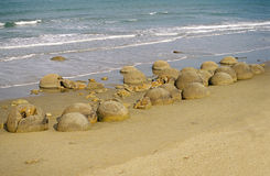 Moeraki boulders on Koekohe Beach, Otago coast, Ne Stock Photography