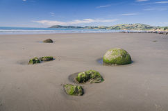 Moeraki boulders, natural wonder in New Zealand Royalty Free Stock Image