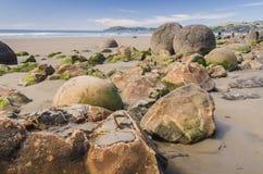 Moeraki boulders, natural wonder in New Zealand Royalty Free Stock Photos