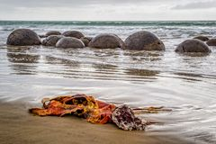 Moeraki Boulders in New Zealand royalty free stock photography