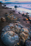 Moeraki boulders in New Zealand. Moeraki boulders at the sunset in New Zealand. Volcanic landscape on the coast line with water and ocean in the background Royalty Free Stock Photography