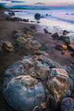Moeraki boulders in New Zealand. Moeraki boulders at the sunset in New Zealand. Volcanic landscape on the coast line with water and ocean in the background Stock Image