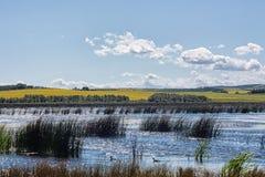 Moeras in Alberta Prairies Royalty-vrije Stock Fotografie