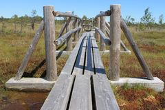 Moeras bij het Nationale Park van Kemeri, Letland Royalty-vrije Stock Fotografie