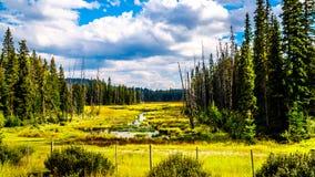 Moeras dichtbij Lac Le Jeune Road door Kamloops, Brits Colombia, Canada royalty-vrije stock foto