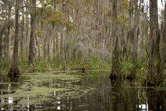 Moeras dichtbij New Orleans, Louisiane Royalty-vrije Stock Fotografie