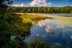 Moeras Marsh Summer royalty-vrije stock afbeelding