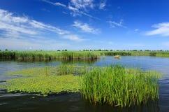 Moeras, meer, riet, blauwe hemel stock foto