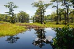 moeras met blauwe hemel en blauw water stock foto