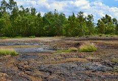 Moeras met eilanden van gras en bos op de achtergrond, natie Stock Foto's