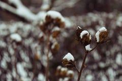 Moeras roze-Malve Stock Foto