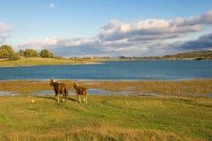 Moeras van Ebro dichtbij Reinosa Royalty-vrije Stock Afbeeldingen
