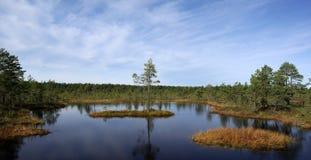 Moeras Viru in aard Estonia.The van Estland. Royalty-vrije Stock Afbeeldingen