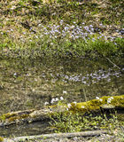 Moerasbloemen Stock Afbeelding