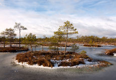 Moeraseilanden in bevroren moerasvijver Stock Foto's