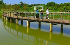 Moerasgang van wetlandpark in Hongkong Stock Afbeeldingen
