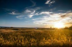 moerasland Stock Afbeeldingen