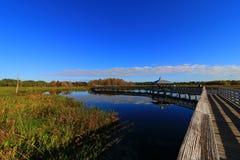 moerasland stock afbeelding