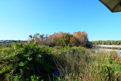moerasland stock foto