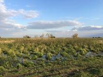 Moerasland bij het Nationale Park van Hortobà ¡ GY Stock Foto