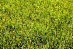 Moerasland bij St Augustine Florida Stock Afbeelding