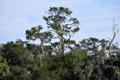Moerasland bij St Augustine in Florida Stock Afbeelding