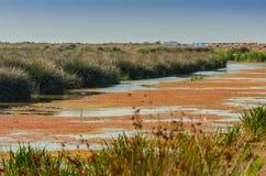 Moerasland in de Kizilirmak-delta Stock Foto's