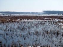 Moerasland in de winter 1 Royalty-vrije Stock Foto's