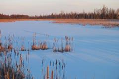 Moerasland in de winter stock foto's