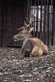 Moerasland deer2 Royalty-vrije Stock Foto's