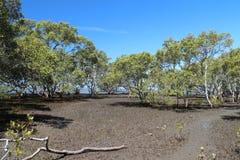 Moerasland dichtbij Brisbane Royalty-vrije Stock Foto