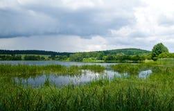 Moerasland in een bewolkte dag Royalty-vrije Stock Fotografie