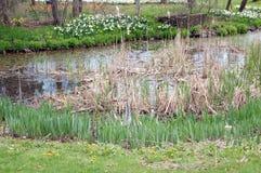 moerasland en gras Royalty-vrije Stock Afbeeldingen