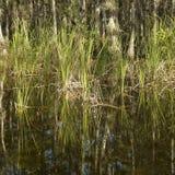 Moerasland in Florida Everglades. stock fotografie
