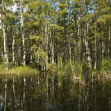 Moerasland in Florida Everglades. Royalty-vrije Stock Afbeeldingen