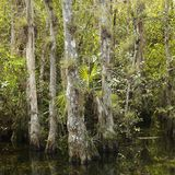 Moerasland in Florida Everglades. stock foto