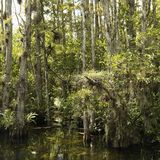 Moerasland in Florida Everglades. royalty-vrije stock foto's
